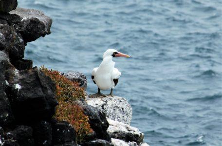 Galapagos Vannesa