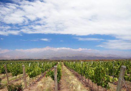mendoza vineyard blue sky