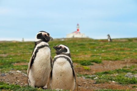 two penguins on magdalena island
